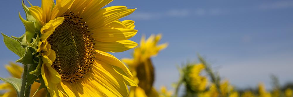 Een stralende dag voor zonnepanelen